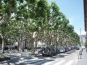 Aquest dijous, fumigació dels arbres del passeig Joan Brudieu de la Seu d'Urgell