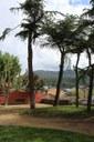 Iniciada la tala de cinc arbres del Parc del Cadí