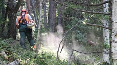 La Fundació Integra Pirineus comença el desbrossament dels boscos d'Andorra