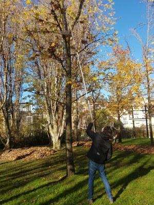 La Seu d'Urgell instal·la novament menjadores i caixes niu per a ocells en els seus parcs