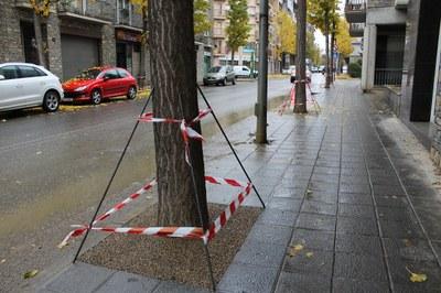 Tapats 164 escocells d'arbres de la part nord de l'avinguda del Salòria