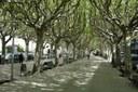 Tractament fitosanitari als arbres del Passeig de la Seu per combatre el tigre del plataner